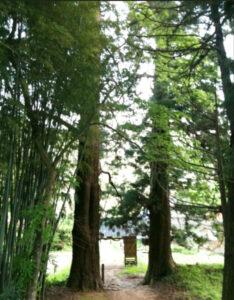 蘇羅比古神社